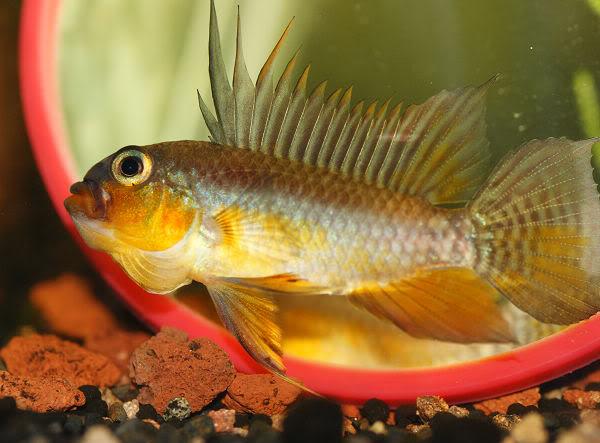 百科:识别症状相似的鱼病